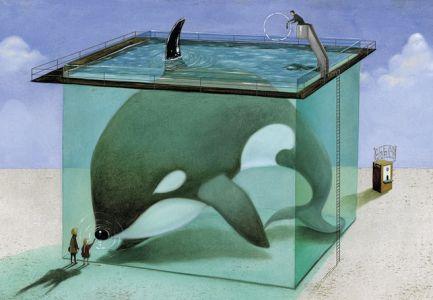 Orca-cautiva-Roger-Olmos_EDIIMA20140527_0652_5